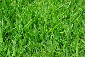 What Is The Best Low Maintenance Grass For Arizona