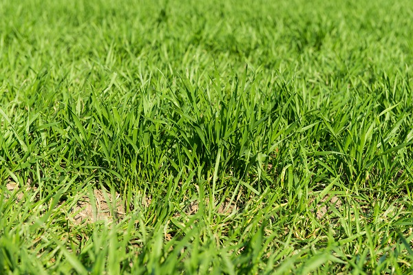 Soil Amendments for Your Arizona Lawn