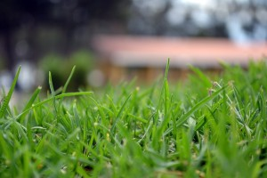 green blades of grass, up close - how to ensure your lawn does not dry out this summer - blog post