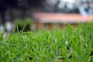 arizona sod- how to fix soil