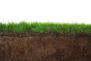 Clay is common in Arizona and has high alkaline levels which cause iron deficiency in home lawns.
