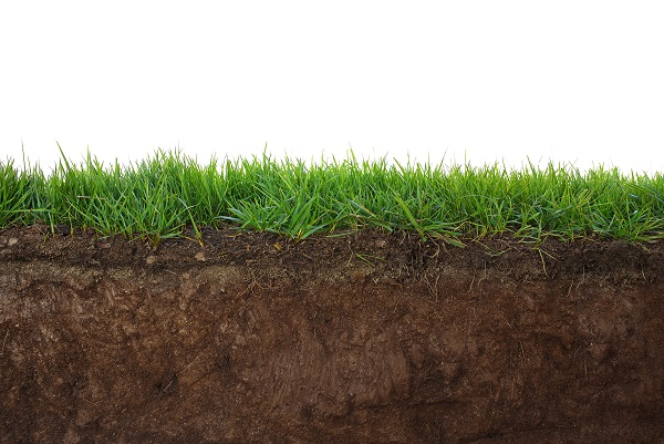 Native desert soil doesn't store water very well, which can cause the sod to dry out very easily.