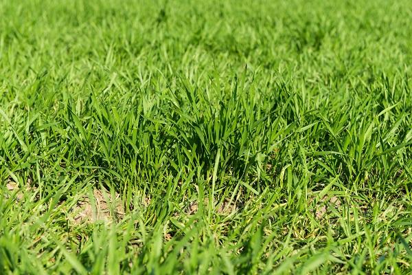 Soil Amendments for Your Arizona Lawn