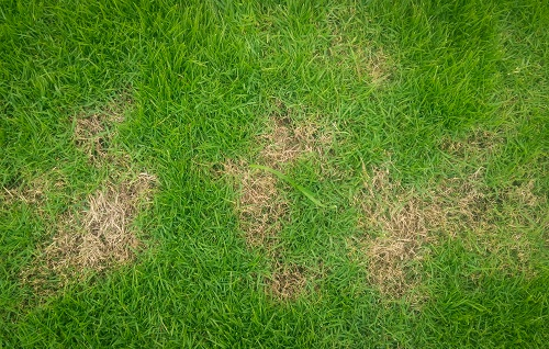 Tips to Prevent Disease and Insects in Your Lawn