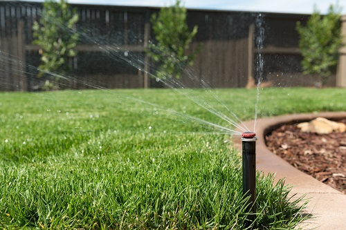 Signs You Have Overwatered or Underwatered Your Lawn