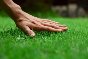 Rye grass is a great choice for Arizona lawns in the winter