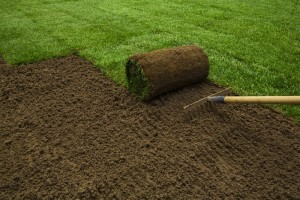 Gardener applying turf rolls in the backyard - what are the benfits of sod?