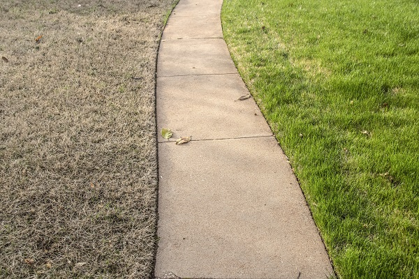 Will dead grass grow back? We answer your question in this article.