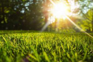 Best Drought Tolerant Grass for Arizona Lawns